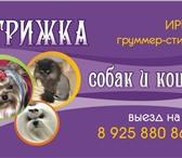 Изображение в Домашние животные Стрижка собак Стрижка и тримминг собак (йорк, мальтийская в Москве 1