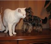 Фотография в Домашние животные Услуги для животных По предварительной записи через СМС, WhatsApp в Москве 1000