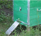 Фото в Хобби и увлечения Разное Продаются перезимованные пчелосемьи в колличестве в Уфе 7000