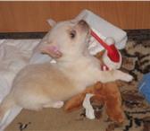Изображение в Домашние животные Услуги для животных Командировка? Отпуск? Срочно?Квартирная передержка в Москве 400