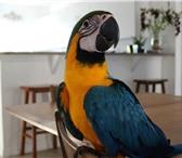 Фотография в Домашние животные Птички Мы рады предложить Вам птенцов выкормышей в Москве 0