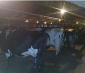 Фото в Недвижимость Разное Продаётся животноводческая ферма в хорошем в Самаре 0