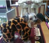 Фото в Домашние животные Товары для животных Индивидуальный пошив одежды для собак. Шапки, в Братске 0