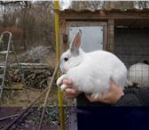 Фотография в Домашние животные Грызуны продаю декоративных кроликов-самочек. Очень в Астрахани 200