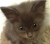 Изображение в Домашние животные Другие животные Три котенка в возрасте 1,5 месяцев ищут своих в Сочи 0