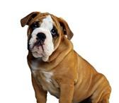 Фотография в Домашние животные Услуги для животных Ветеринарная помощь, операции; терапия, хирургия, в Волгодонске 0