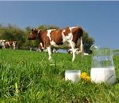 Фото в Домашние животные Корм для животных УЖК - высокоэффективная установка для приготовления в Ростове-на-Дону 1