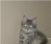 Фото в Домашние животные Вязка Домашняя кошка 4 года готова к первой вязке в Казани 0