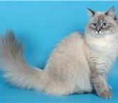 Foto в Домашние животные Найденные Найдена    кошка   в    ошенике.     Порода в Владимире 0