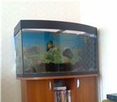 Изображение в Мебель и интерьер Мебель для гостиной Продам панорамный аквариум немецкой марки в Братске 15000