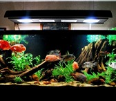 Изображение в Домашние животные Рыбки Аквариумы в Сочи на заказ. Любые цвета и в Сочи 500