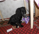 Фотография в Домашние животные Найденные срочно!г.Североморск! 2 февраля,около 17 в Североморск 0