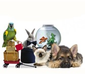 Фотография в Домашние животные Товары для животных «Зайцы» – это зоо интернет-магазин, который в Москве 10