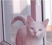 Foto в Домашние животные Потерянные 16 мая, утром в г Ивантеевка,  ул Толмачева в Ивантеевка 0