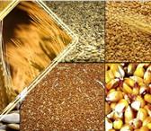 Изображение в Домашние животные Товары для животных Мы продаем пшеницу-11р/кг Ячмень-10р/кг,Овёс-8р/кг в Владимире 0