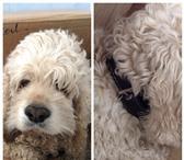 Foto в Help! Находки Найден пес в р-не Ташла, ул.огородная, окрас в Ставрополе 0
