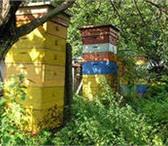 Foto в Домашние животные Другие животные Продам пчелопакеты и пчелосемьи.Цена договорная.Консультация в Воронеже 0