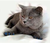 Изображение в Домашние животные Товары для животных Антицарапки- это защитные колпачки, которые в Улан-Удэ 230