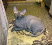 Изображение в Домашние животные Потерянные Потерялась кошечка,  возраст 1 год, порода в Перми 0