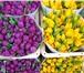 Foto в Домашние животные Растения Выбирайте лучших! Нас советуют друзьям и в Москве 18