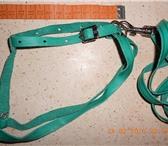 Foto в Домашние животные Товары для животных Шлейка и поводок из натуральной мягкой кожи. в Подольске 500