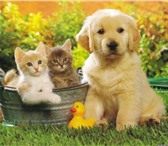 Foto в Домашние животные Услуги для животных Временное содержание и уход за животным (передержка) в Оренбурге 0