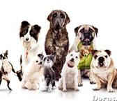 Изображение в Домашние животные Стрижка собак Предлагаю полный комплекс услуг по уходу в Нижнем Тагиле 0