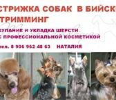 Изображение в Домашние животные Стрижка собак Cтрижка собак в Бийске, тримминг, купание в Москве 0