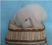 Foto в Домашние животные Грызуны Питомник карликовых кроликов Заячий домик в Москве 0