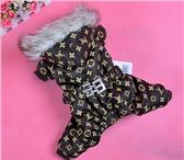 Изображение в Домашние животные Одежда для собак Интернет-магазин zootovary74 предлагает качественную в Челябинске 400