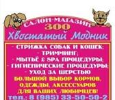 Фотография в Домашние животные Услуги для животных Зоо салон-магазин «Хвостатый Модник»-стрижка в Апрелевка 1000