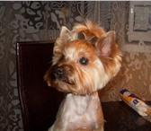 Изображение в Домашние животные Услуги для животных Стрижка собак и кошек всех пород,  в том в Москве 0