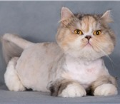 Изображение в Домашние животные Услуги для животных Опытный парикмахер приедет к Вам на дом (Строгино, в Москве 0