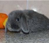 Фото в Домашние животные Грызуны Предлагаем Вам купить крольчат, которых разводят в Нижнекамске 2000