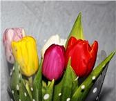 Фото в Домашние животные Растения Тюльпаны к 8 марта 2016 года в Красноряске, в Красноярске 25