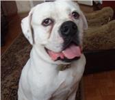 Изображение в Домашние животные Найденные Найдена собака в г. Волжском в промышленной в Волжском 0