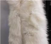Foto в Одежда и обувь Аксессуары Песец белый полярный, цвет натуральныйПримерный в Омске 5500