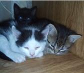 Фотография в ? Отдам даром-приму в дар Очень милые котята рождены 24 июня 2018 от в Москве 0