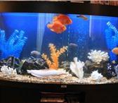 Фотография в Домашние животные Услуги для животных Чистка аквариумов, сифонирование грунта, в Туле 3000