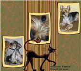 Foto в Домашние животные Услуги для животных ЗооСалон  Патрик.Профессиона льнаястрижка в Москве 700