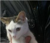 Изображение в Домашние животные Отдам даром Котик-мальчик добрый и ласковый ищет любящих в Улан-Удэ 0
